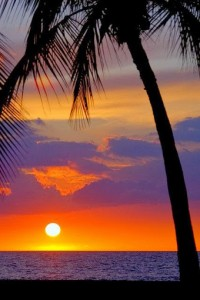 sol e coqueiro